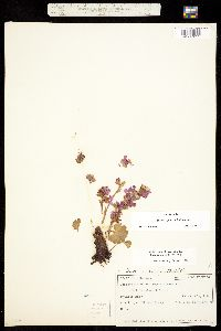 Telesonix jamesii image