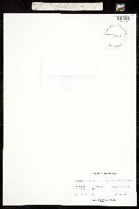 Image of Androsace carinata