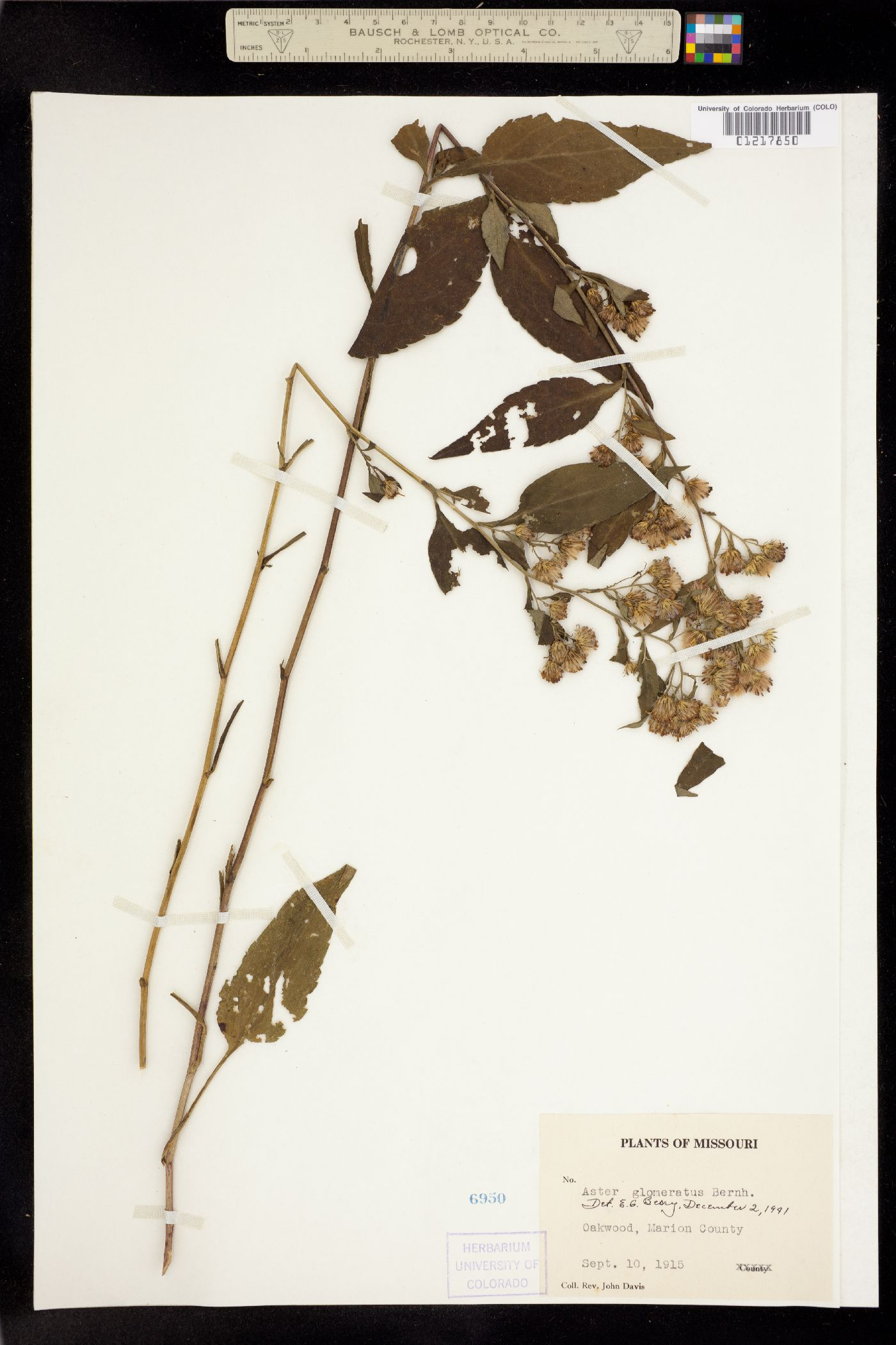 University of Colorado Museum of Natural History Herbarium