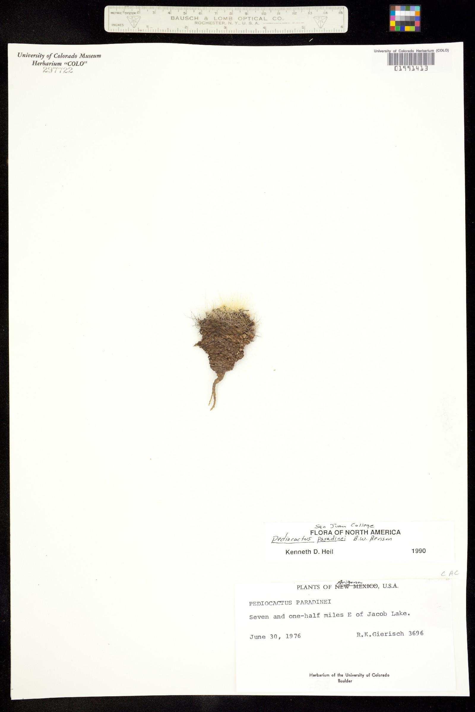 Pediocactus paradinei image
